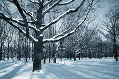 The winter landscape. Winter theme - trees in a park covered with snow over blue sky Royalty Free Stock Image