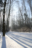 Winter landscape. Forest after a snowstorm in Russia (near Moscow Stock Photos