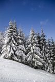 Winter landscape. Of a ski slope with snow and trees Royalty Free Stock Images