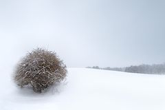 Winter landscape. Under the falling snow royalty free stock photography