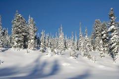 Winter Landscape Royalty Free Stock Photos