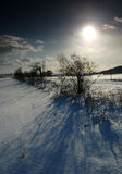 Winter landscape. With snow and sun Royalty Free Stock Images