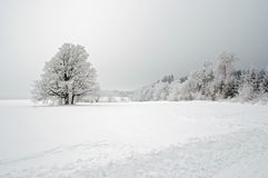 Winter landscape. Winter ladscape with snowy tree royalty free stock photography
