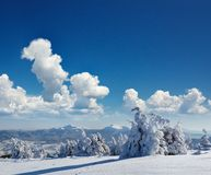 Winter landscape. With fur-trees and fresh snow. Ukraine, Carpathians Stock Photo