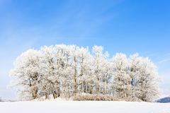 Winter landscape Stock Photography