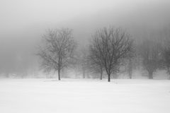 Winter landscape. A minimal landscape with trees Stock Photo