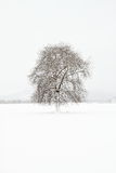 Winter landscape. A minimal landscape with a tree Royalty Free Stock Image