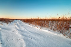 Free Winter Landscape Royalty Free Stock Image - 23286236