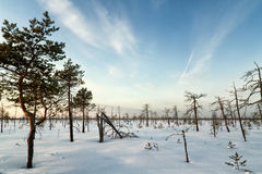 Winter Landscape. With dry trees Stock Photos