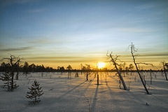 Winter Landscape. With dry trees. Sunset Stock Photo