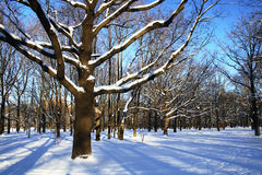 Winter landscape. Winter theme - trees in a park covered with snow over blue sky Stock Photo