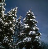 Winter landscape. Beautiful winter landscape with blue sky Stock Photography