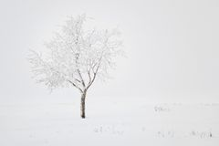 Winter landscape. With lonely tree and snow field stock image