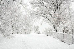 Free Winter Landscape Royalty Free Stock Images - 28010209