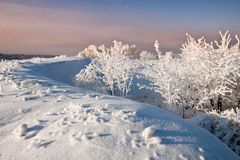 Free Winter Landscape Royalty Free Stock Photography - 28618957