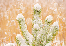 Winter landscape. Royalty Free Stock Images