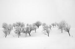 Winter landscape. With grey and naked trees Royalty Free Stock Photo