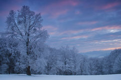 Winter landscape. With trees full of frost Stock Photography