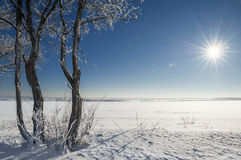 Winter landscape. With sun and trees Stock Image
