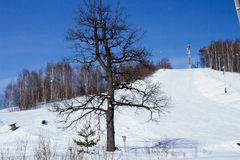 Winter landscape. One tree against the blue sky on a winter day Royalty Free Stock Photography