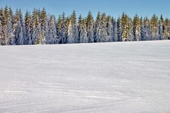 Winter landscape. With a conifers royalty free stock photo