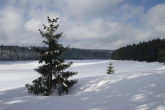 Winter landscape. Gerneric winter landscape,tree on a frozen snow covered lake Stock Photos