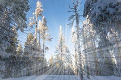 Free Winter Landscape Stock Image - 30920241