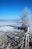 Winter Landscape. With frozen fence, trees and field Stock Image