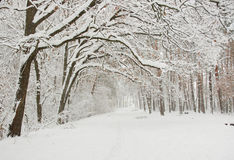 Winter landscape. Forest after a snow fall Royalty Free Stock Photography
