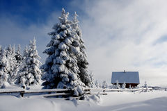 Winter landscape. Trees covered with snow and a cabin royalty free stock image