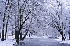 Winter Landscape. With snow-covered trees and a winding stream Royalty Free Stock Images