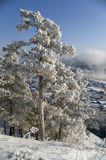 Winter landscape. On a background of a winter landscape trees in snow. A fog Stock Images