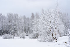 Winter landscape. With trees coverd by snow Stock Photos