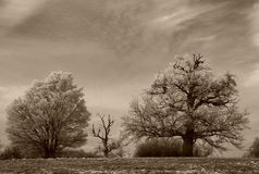 Winter Landscape. The rime on trees royalty free stock images