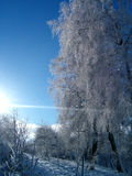 Winter Landscape. Trees in winter, whit frost Stock Photo