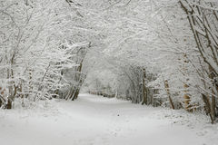 Winter landscape. Covered in snow Royalty Free Stock Photo