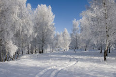 Winter Landscape. Sunny winter day in the forest Stock Photo