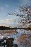 Winter landscape. Winter field landscape Stock Images