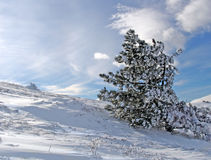 Winter landscape. With a fur-tree on a background of the sky Stock Photos