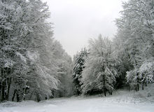 Winter landscape. Mountain forest covered in snow. January in Romania Stock Photography