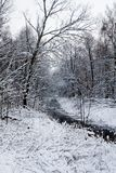 Winter landscape. With stream and forest Stock Photos