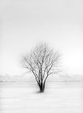 Winter landscape. A lonely tree on the snowy field Stock Image