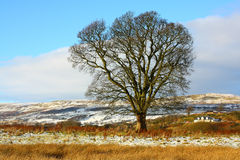 Winter landscape. Winter, Scottish landscape with tree and hills Royalty Free Stock Image