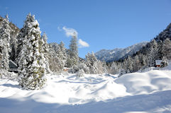 Winter landscape. Winter in the forest in the mountains Stock Photo