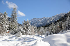 Winter landscape. Winter in the forest in the mountains Royalty Free Stock Photos