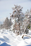 Winter landscape. Winter in the forest in the mountains Royalty Free Stock Photo