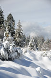 Winter landscape. Winter in the forest in the mountains Stock Photography