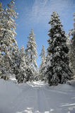 Winter landscape. Winter in the forest in the mountains Stock Image