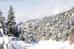 Winter landscape. Winter in the forest in the mountains Stock Images