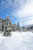 Winter landscape. Winter in the forest in the mountains Royalty Free Stock Images